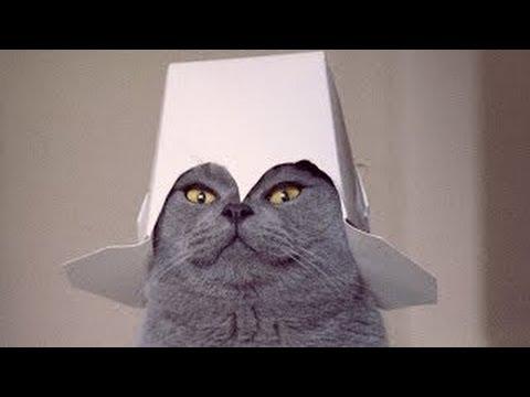 videomarkkinointi kissa